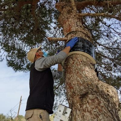 Control procesionaria del pino