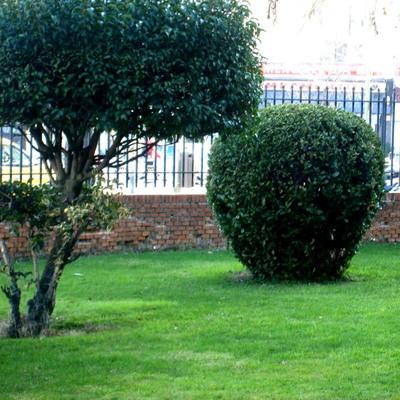 Recorte de Arbustos