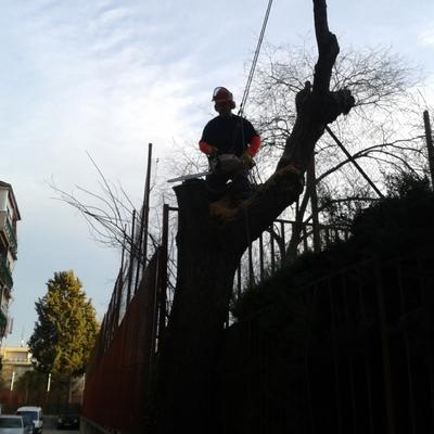 Tala de árbol peligroso junto al patio de un colegio publico