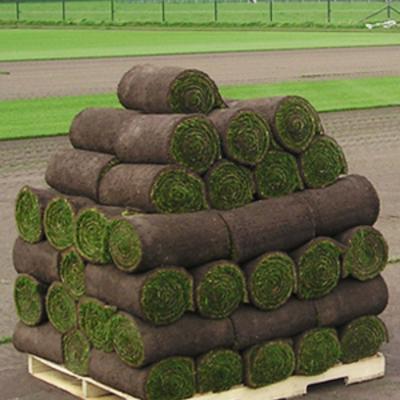 Palet de rollos de tepe