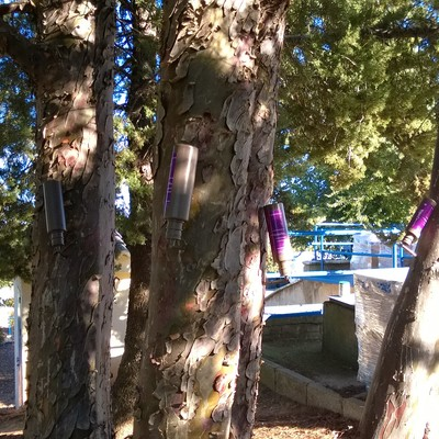 Control de procesionaria del pino