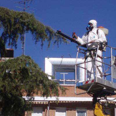 Tratamiento fitosanitario contra la procesionaria del pino