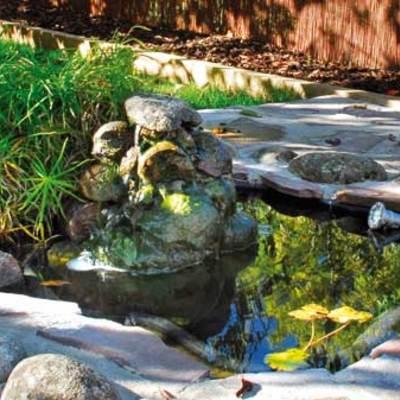 Un estanque es un remanso de paz.