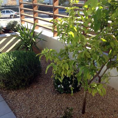 Un jardin minimalista de un cliente nuestro en Palma
