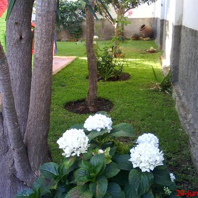 Un rinconcito ordenado Jardineria sevilla