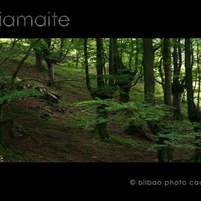 valles y bosques