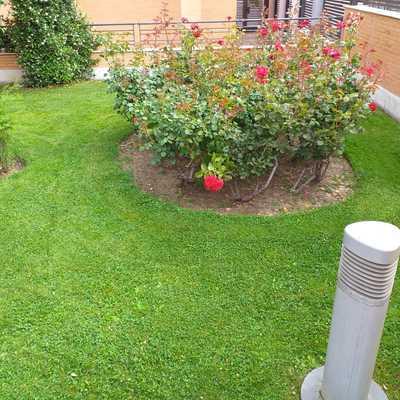 Mantenimiento semanal de jardineria