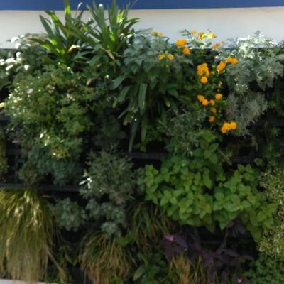 Jardin Vertical pequeño sobre una pared.