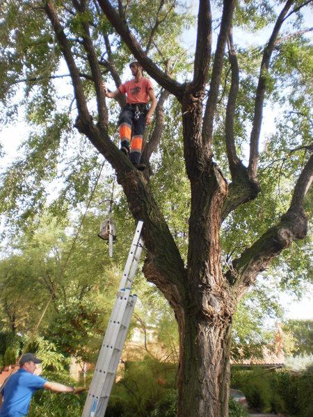 Foto tala de arboles de jardineria natur 580695 for Tala de arboles madrid