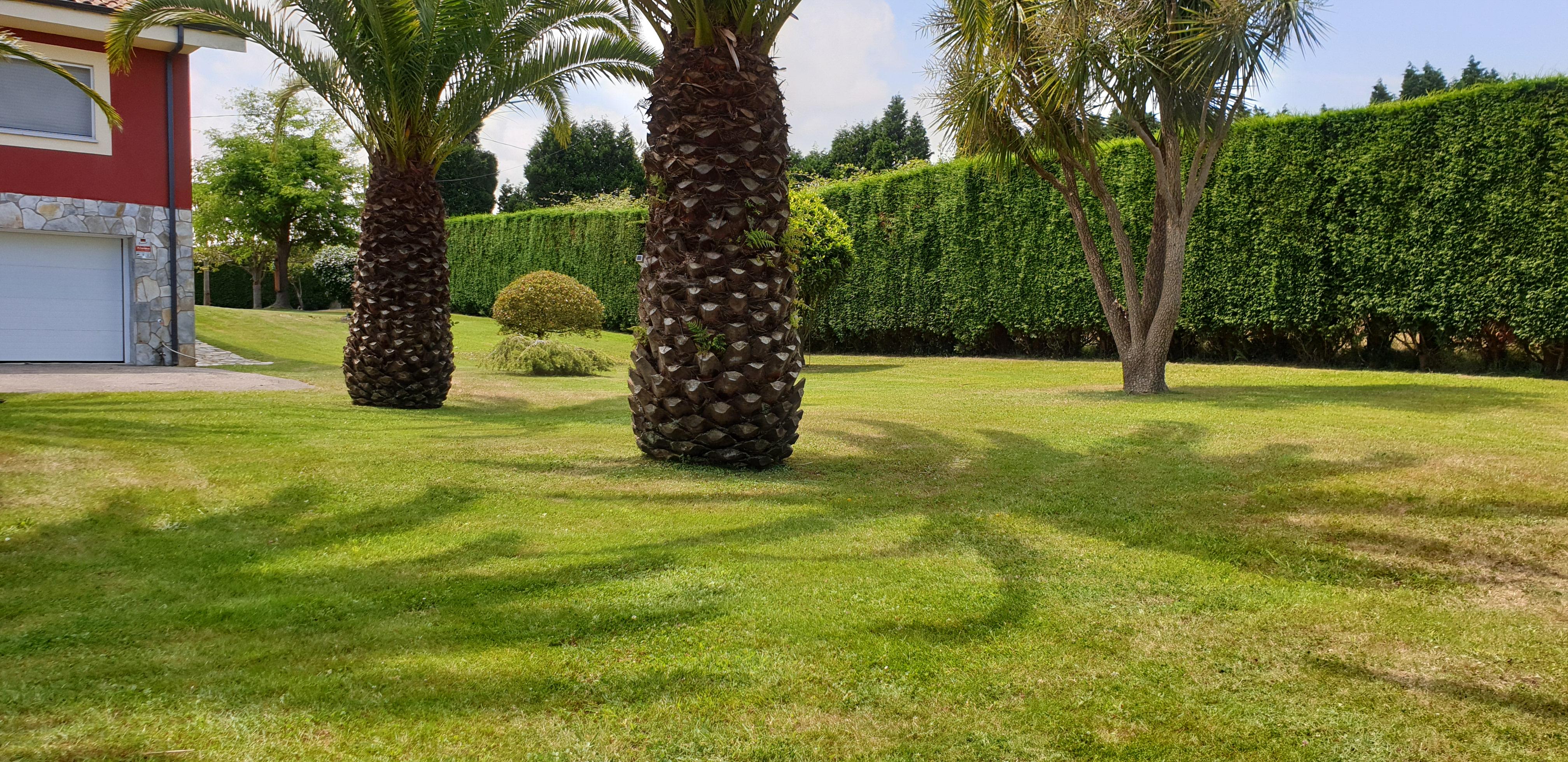Jardineria Y Podas Mario