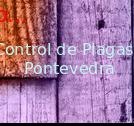 Control de Plagas Pontevedra