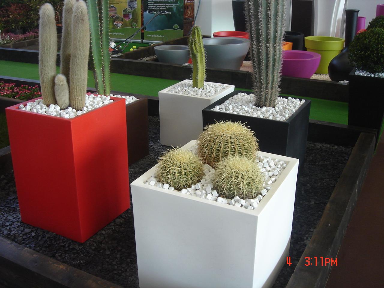Ginkgo Biloba Jardinería y Paisajismo