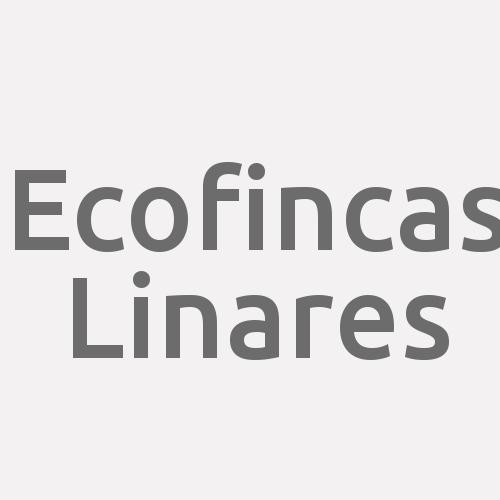 Ecofincas Linares