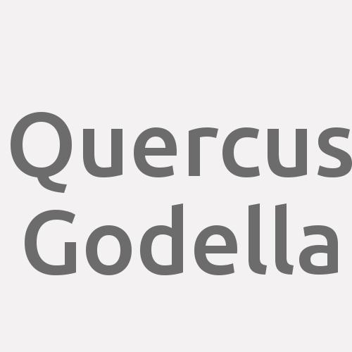 Quercus Godella