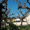 Podar / dar forma a arbustos y árboles de jardín