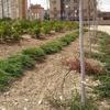Foto: Jardineros, Mantenimiento Piscinas, Riego Automático