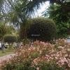 Foto: Jardineros, Pérgolas, Mantenimiento Piscinas
