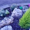 Poda, limpieza de hierba y mantenimiento