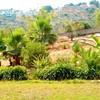 Arrancar morera y limpiar el patio de maleza