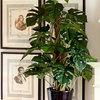 Podar arboles y plantas / manutencion general por 1 dia entero