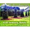 Aloe-jardineria