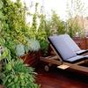 Manteminimiento de jardines en madrid