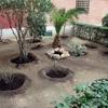 Necesitaría que mi jardin fuera transitable , sin muchas florituras