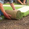 Desbrozar jardin con grama