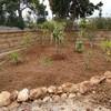 Podar y hacer pequeños arreglos en un jardín