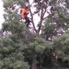 Jardineria Aitor