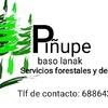 Piñupe Baso Lanak