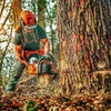Alex Carbonell Arboricultura