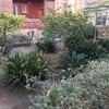 Hacer mantenimiento de jardín