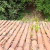 Limpieza de tejado y canalones