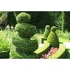 Narcis Jardins