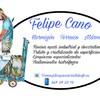 Limpieza Cristales Felipe Cano