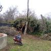 Podar o cortar pinos de 15 m