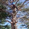 Poda pinos guadarrama