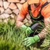 Limpiar malar hiervas y plantar unas tomateras