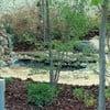 Hacer jardin paisajista