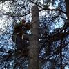 Talar árbol con riesgo de que se caiga