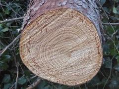10% de descuento en el segundo árbol
