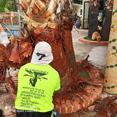 Limpieza de tronco