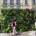 Jardín vertical en Cabo Huertas