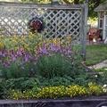 5-consejos-para-cuidar-plantas-exteriores-31