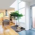 árbol cocina