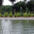 Bambú, lago