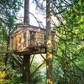 Casa entre dos árboles