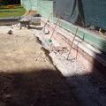 Desmontaje losetas caucho y limpieza de terreno