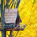 Casitas en árbol